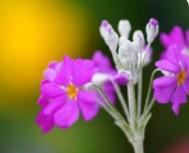 关于花的英语句子15条